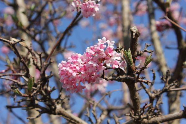 Die Frühlingsgefühle werden geweckt :-D