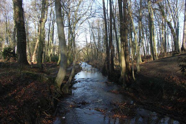Die Fulde im Loccumer Klosterwald