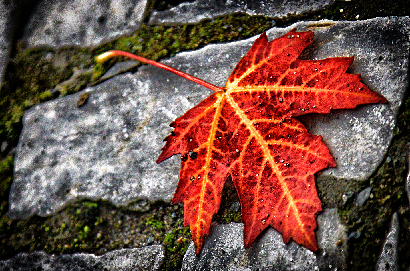 Die Funken des Herbstes...