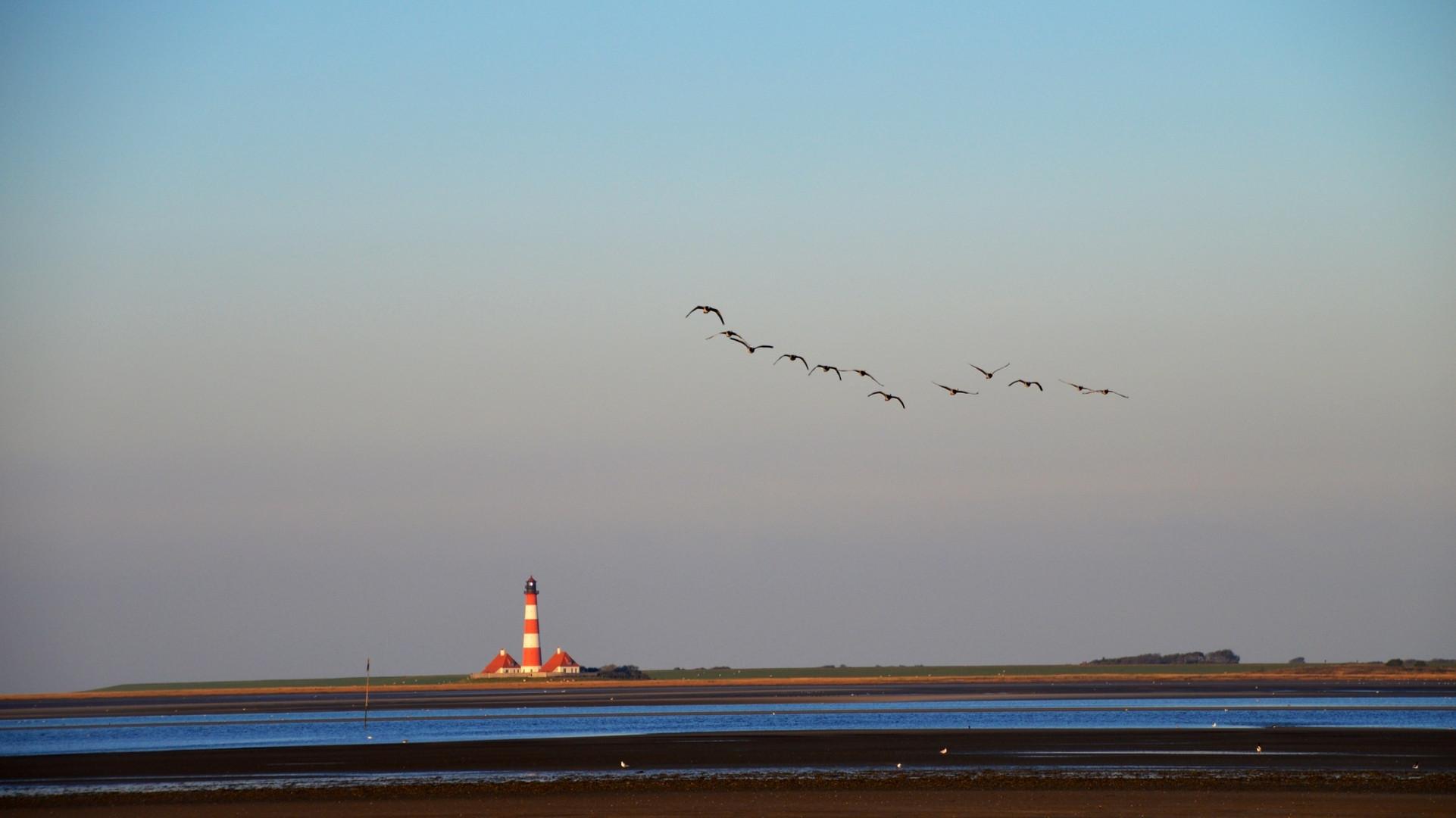 Die Gänse fliegen in den Süden - Westerhever Leuchtturm