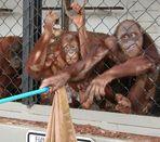 Die ganze Affenbande brüllt...Teil 3