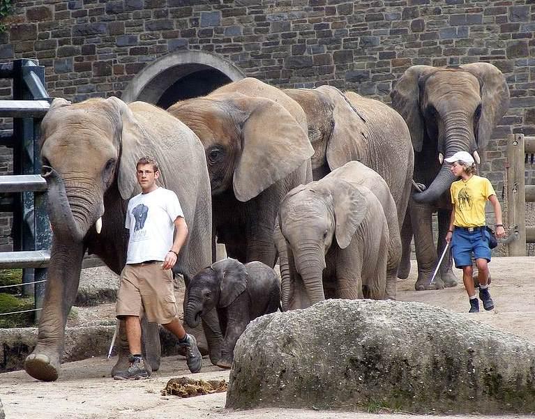 Die ganze Elefantenhorde im Gleichschritt marsch!