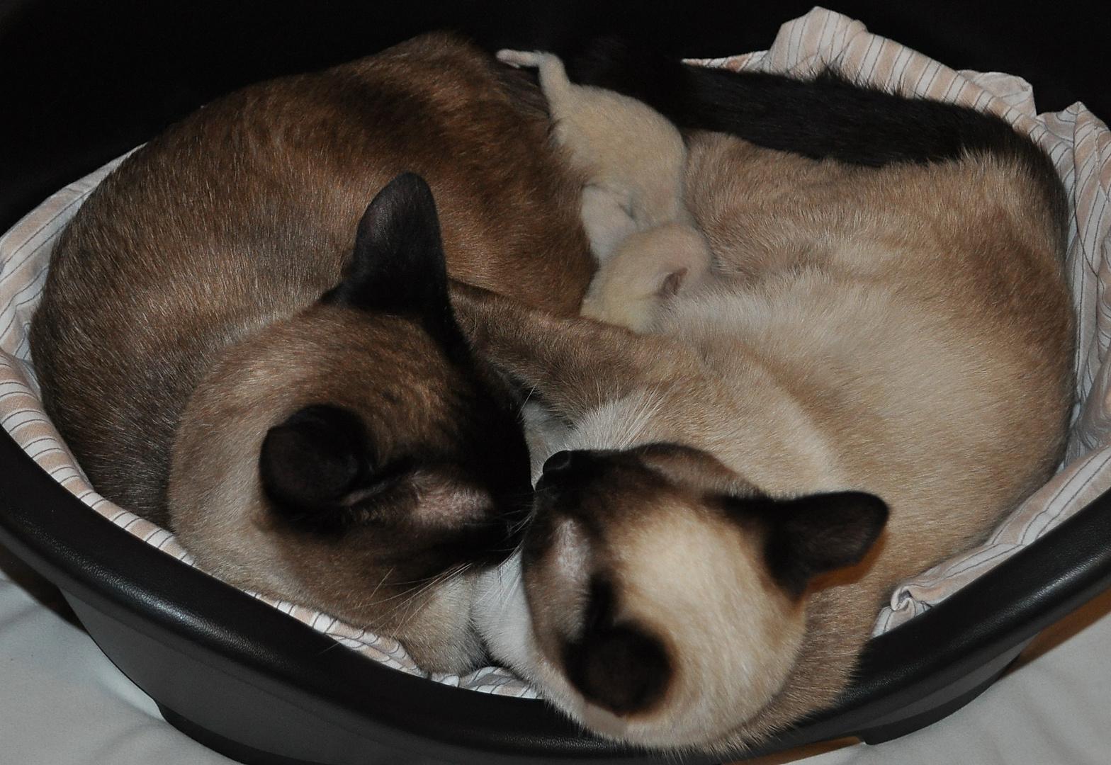 Die ganze Katzenfamilie (links Kater Krümel, rechts Katze Flöckchen, dazwischen die Kinder)