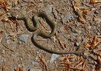 Die ganze Schlange