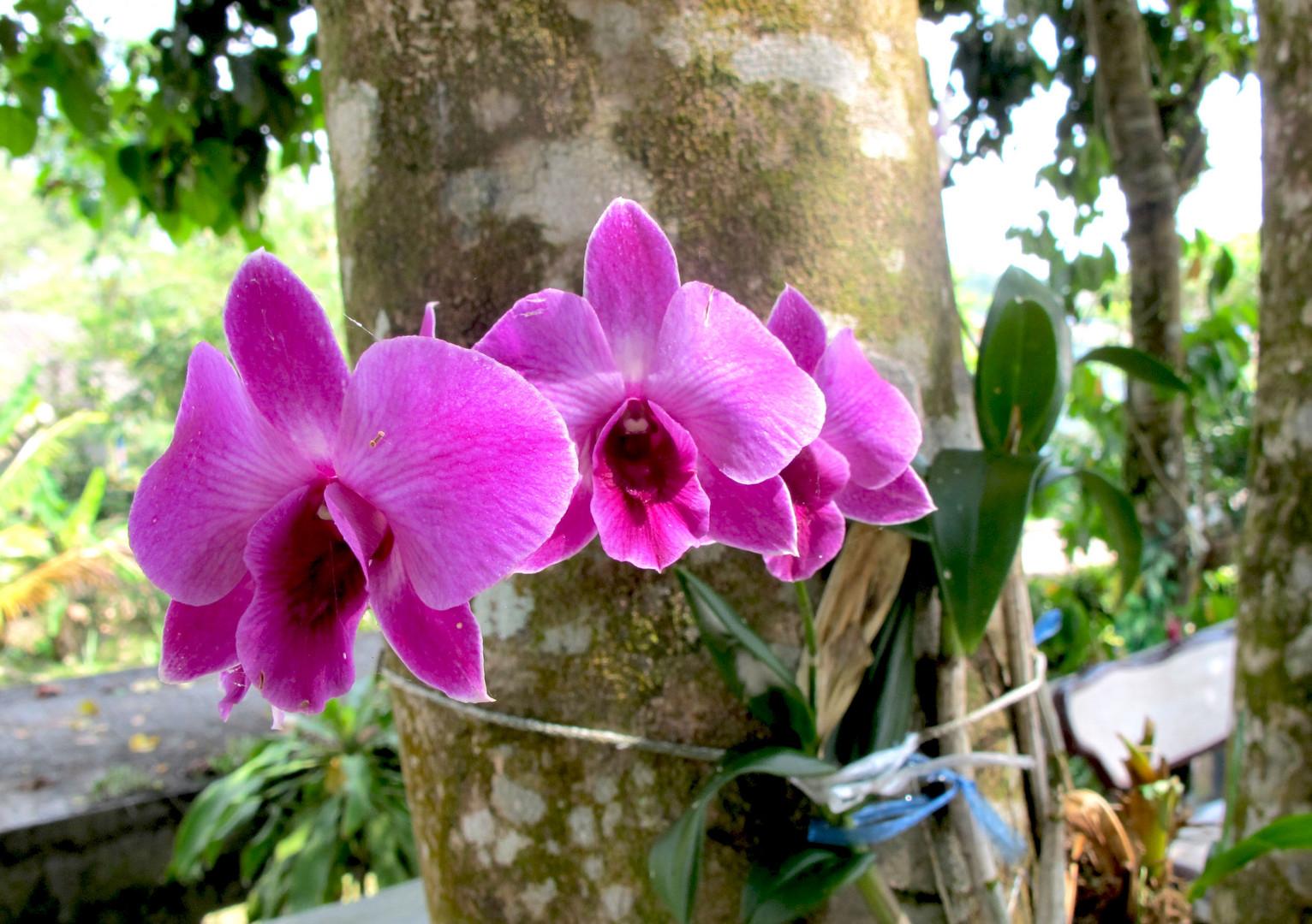 Die gehören auch zu Thailand.