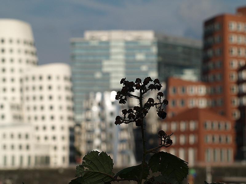 Die Gehry-Häuser im Medien-Hafen in Düsseldorf - mal anders...