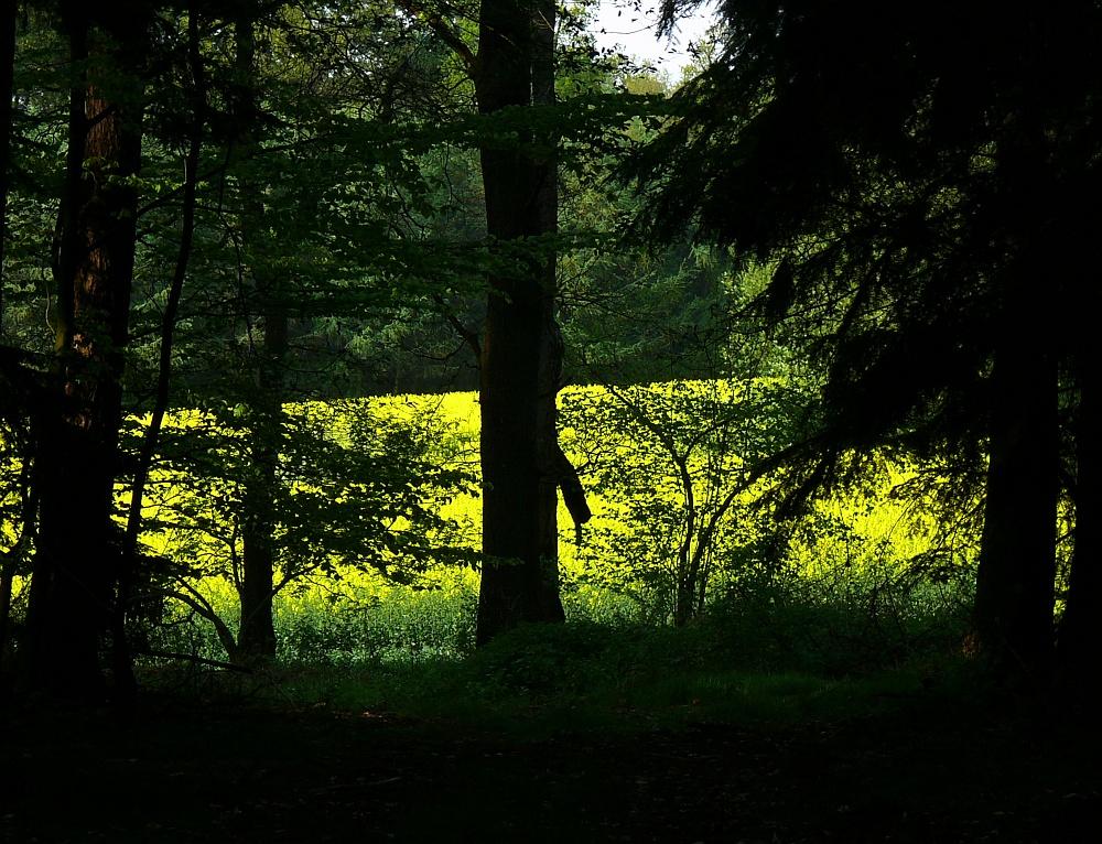 Die gelbe Waldlichtung