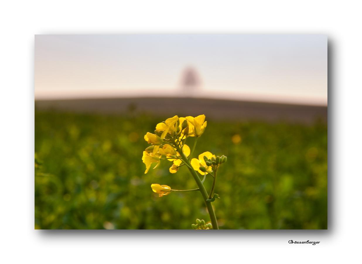 Die gelben Felder II