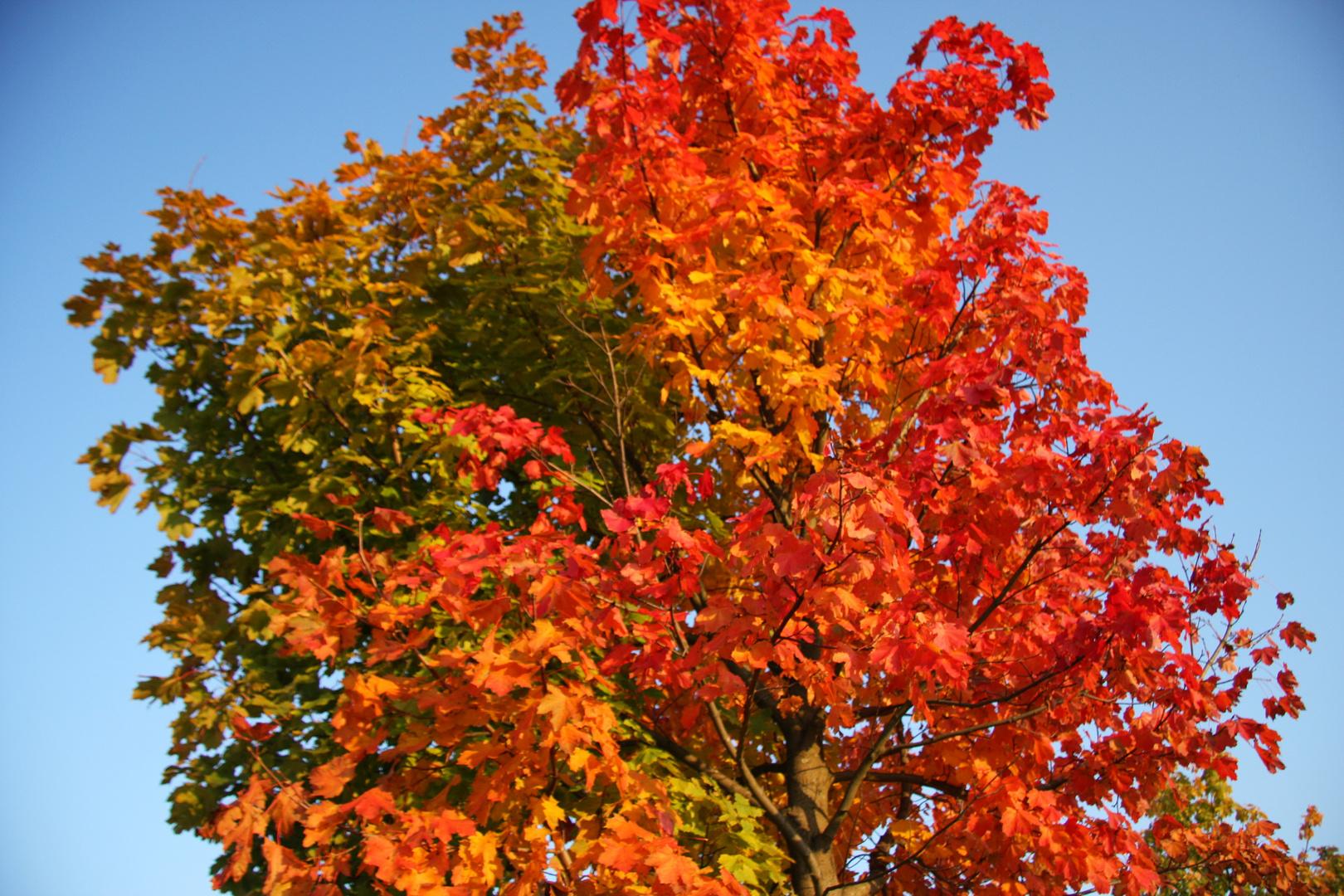Die Gesamte Farbenpracht in einem Baum