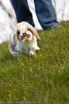 Die Geschichte eines Kaninchens III