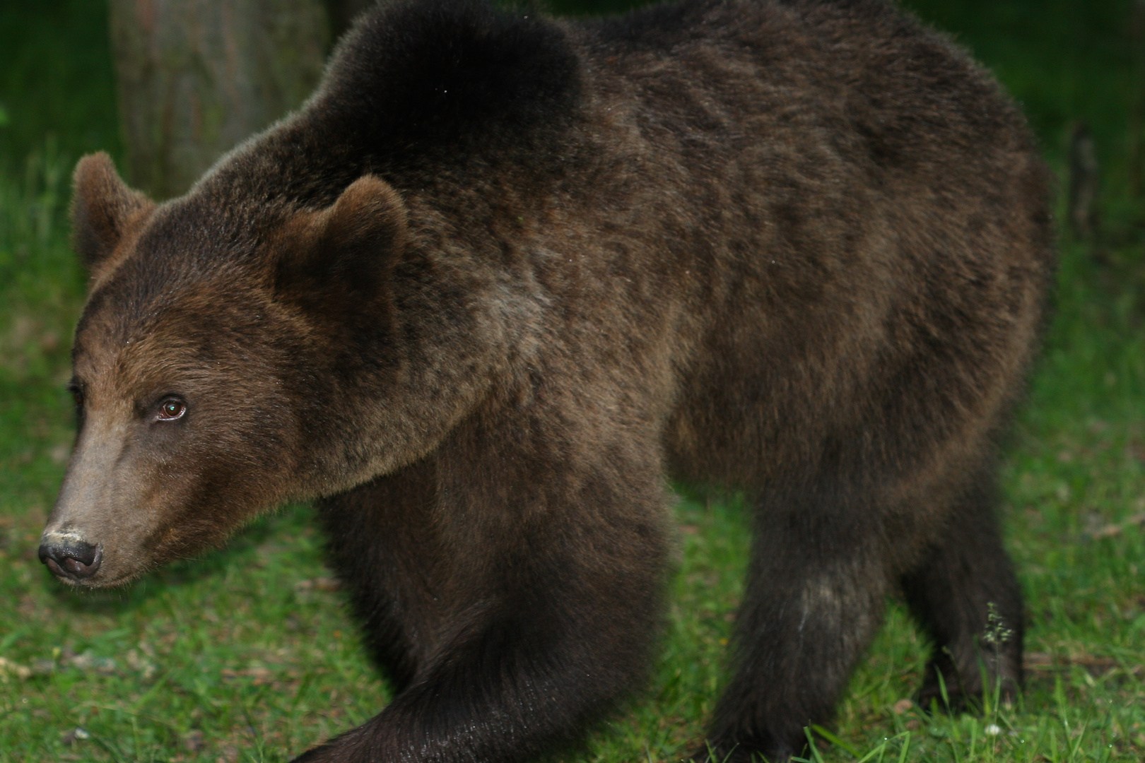 Die Geschichte vom Bären