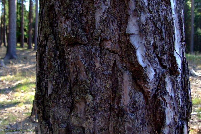 Die Gesichter des Waldes 1.