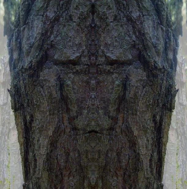 Die Gesichter des Waldes 15.