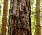 Die Gesichter des Waldes 18