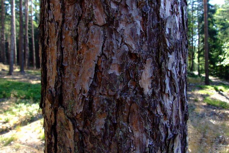 Die Gesichter des Waldes 2.
