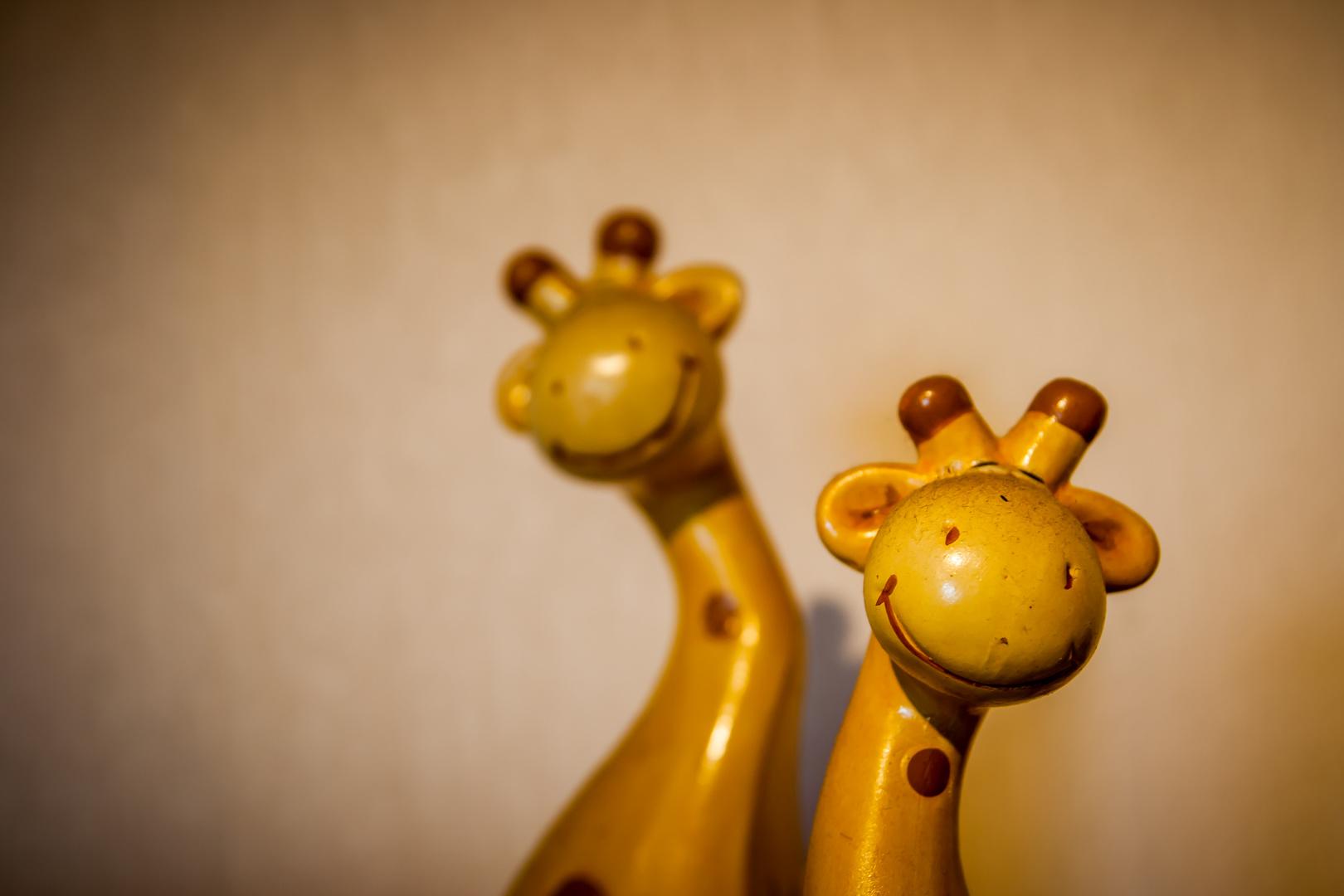 Die Giraffenbrüder