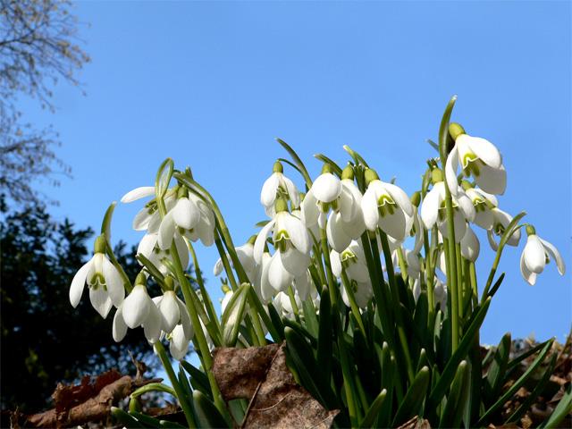 Die Glocken leuten den Frühling ein