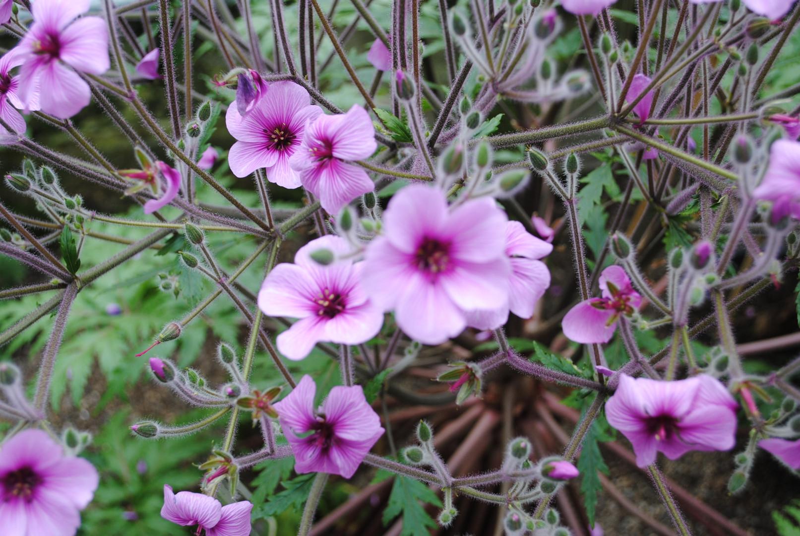 Die glühende Pflanze