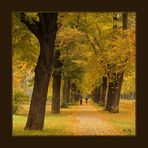 Die goldene Seite des Herbstes