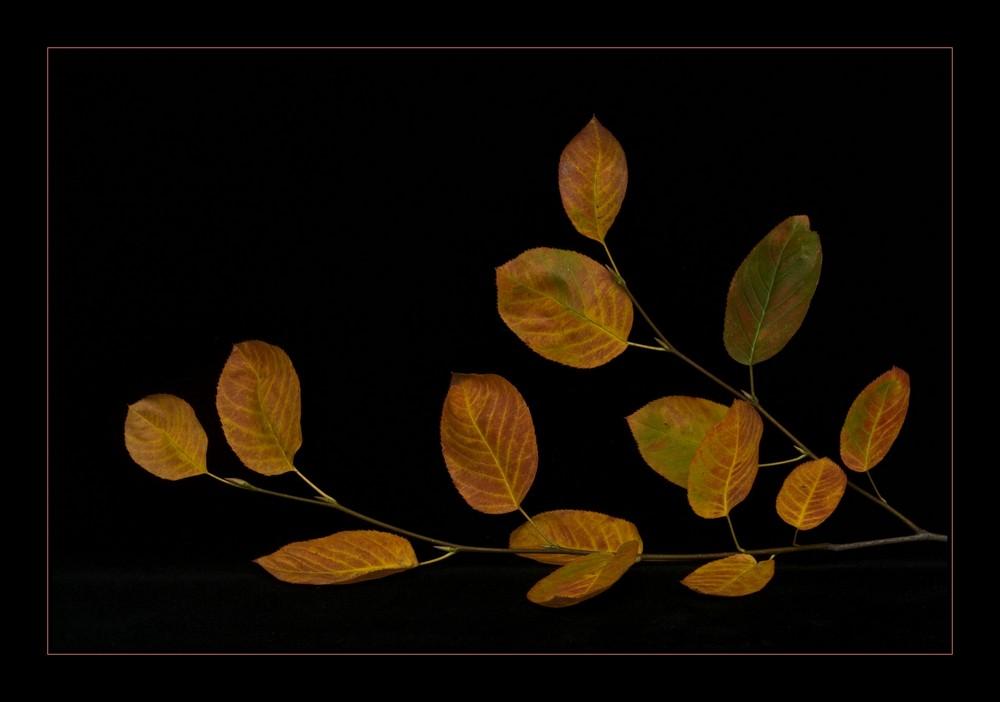 Die goldenen Blätter....