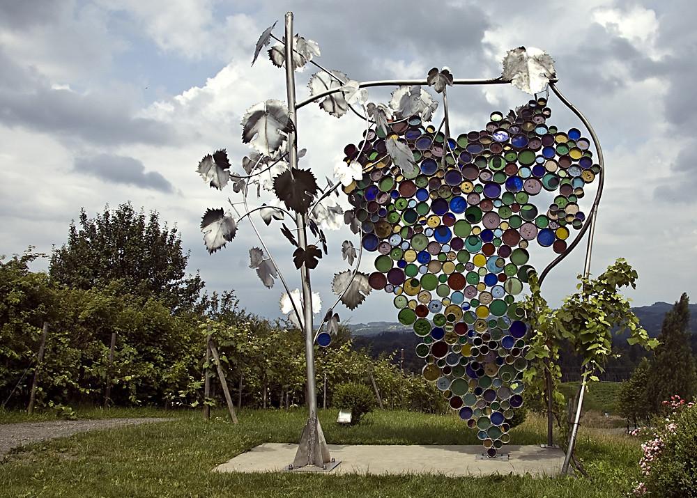 Die größte Weintraube der Welt