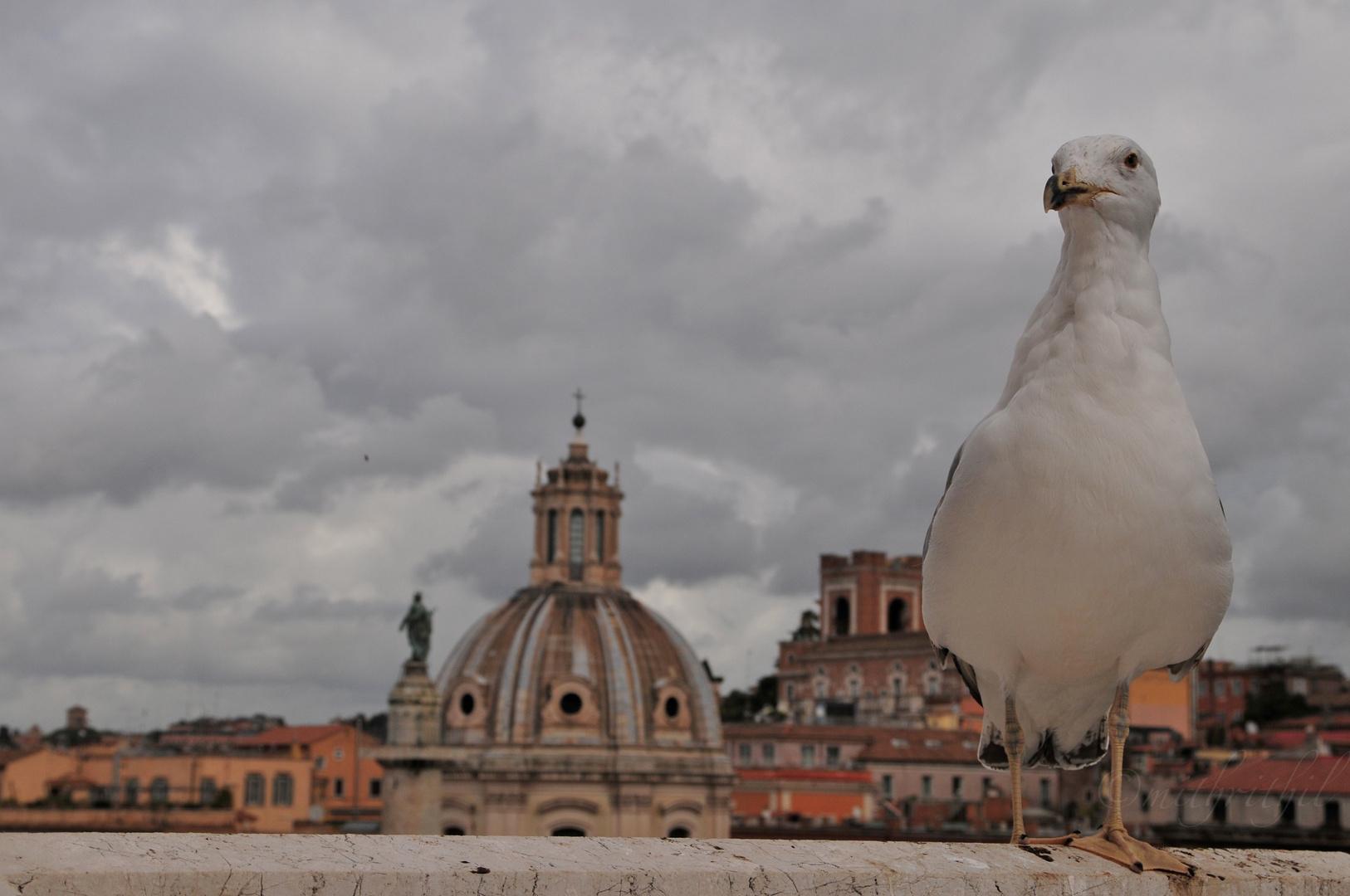 Die große Taube von Rom