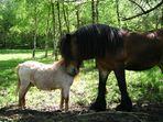 Die Große und der Kleine