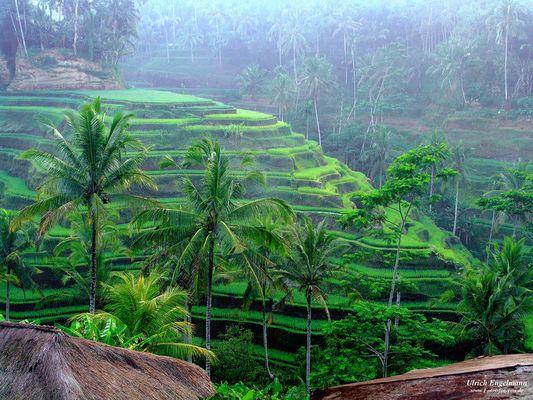 Die grüne Seele Balis II