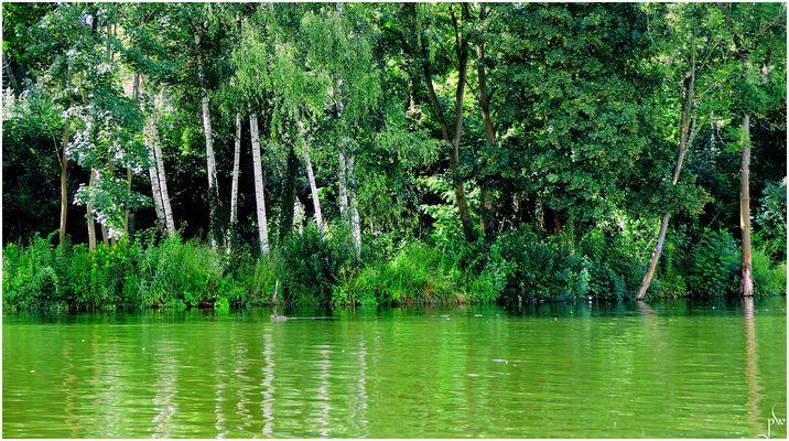 Die grünen Wasser der Trave