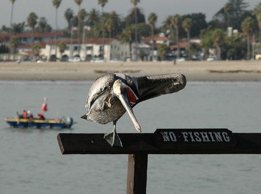 Die haben doch einen Vogel......