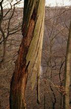 Die Häutung eines Baumes