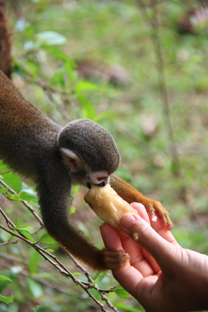 Die Hand die einen füttert, soll man nicht beisen...