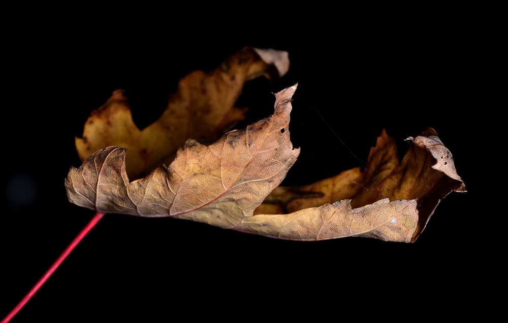 Die Handschrift des Herbstes #3