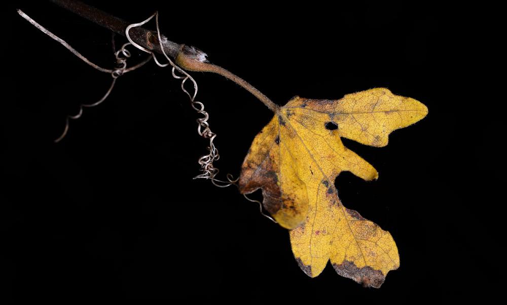 Die Handschrift des Herbstes #6