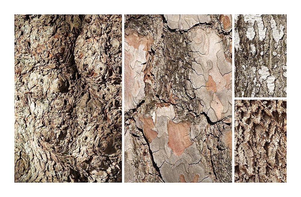 Die Haut der Bäume