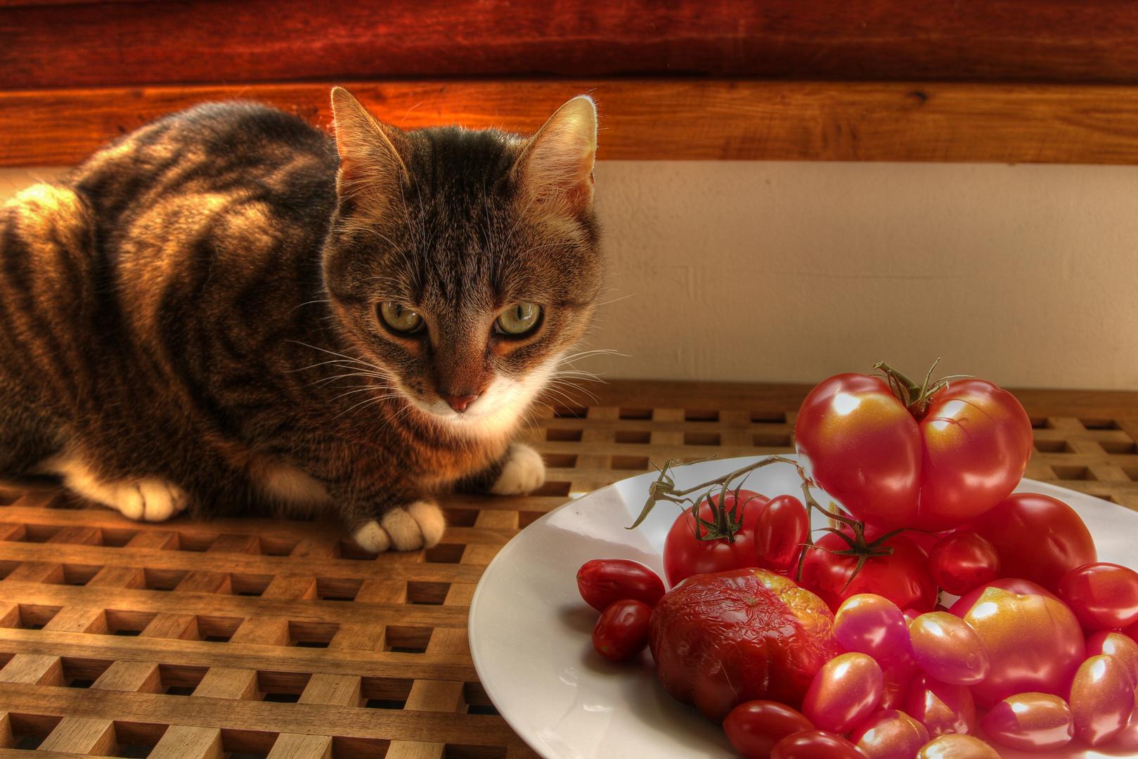 ...die hdr Katze oder das making of...