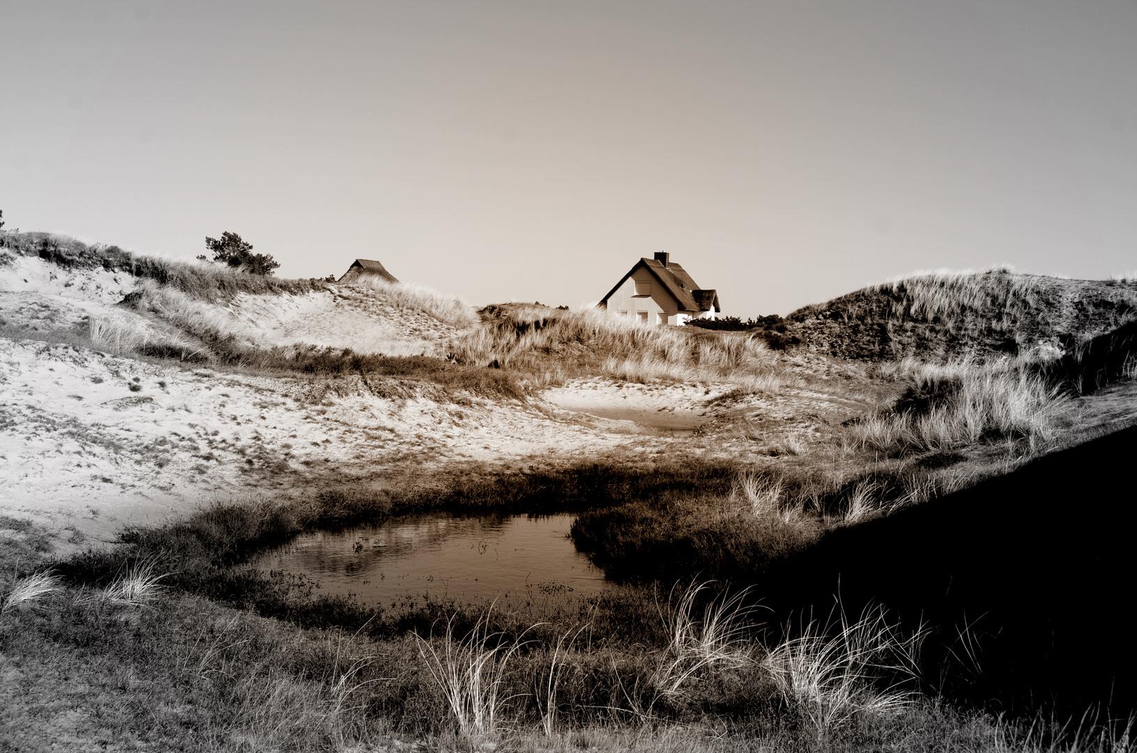 Die Heide und seine Dünen ( Insel Hiddensee )
