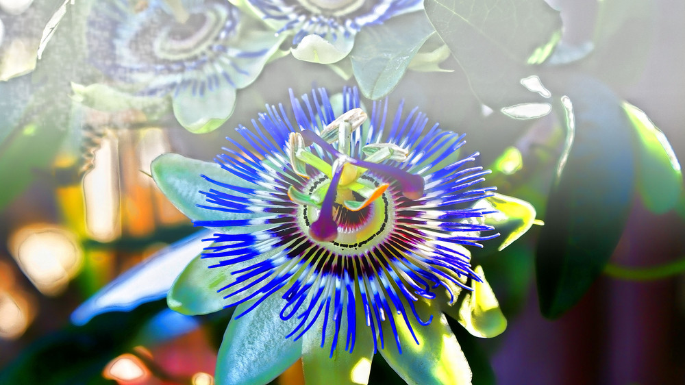 Die heilige Blume