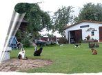 Die Heimat der Samtpfötchen aus Moltenow ... #1