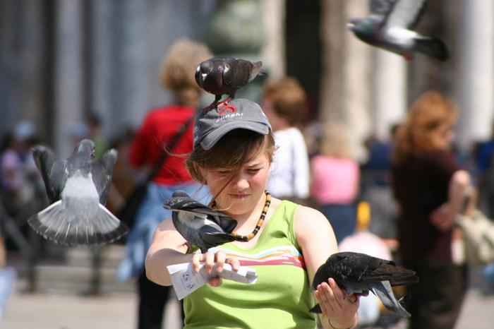 die hemmungslosen Tauben auf dem Markusplatz