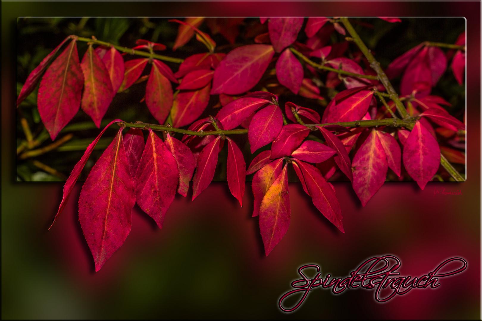 Die Herbstfärbung ....