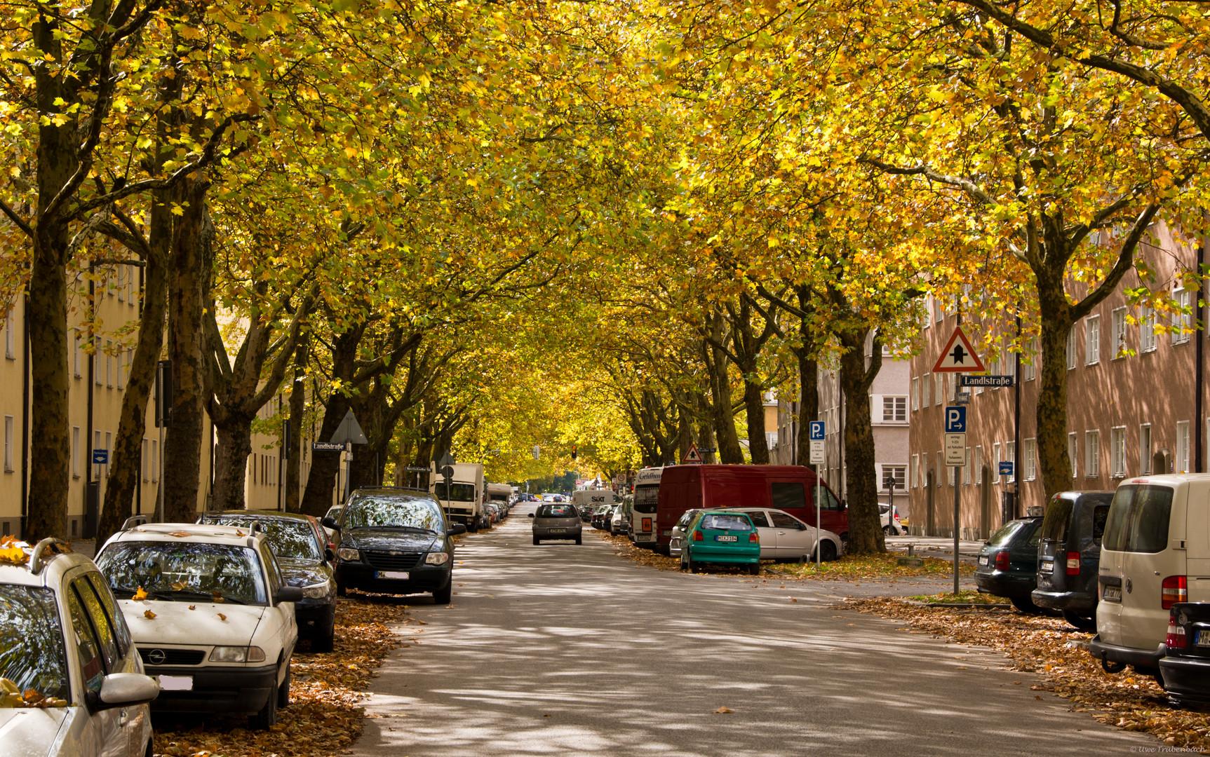 Die herbstliche Untersbergstrasse in Giesing