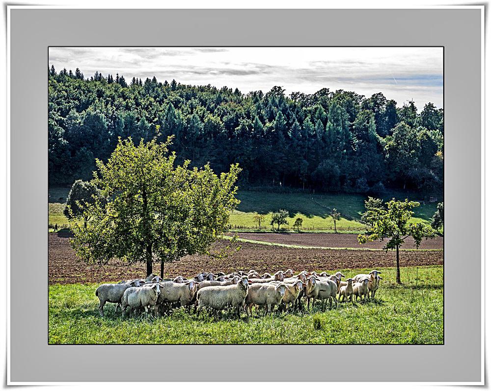 ~ die Herde ~