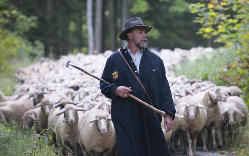 Die Herde ist sein ganzer Stolz - unterwegs mit dem Wandschäfer