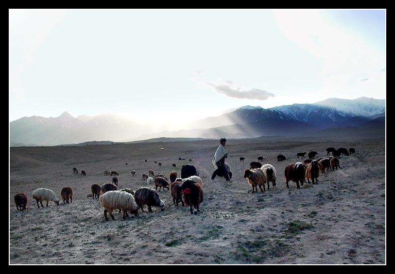Die Herde und ihr Hirte