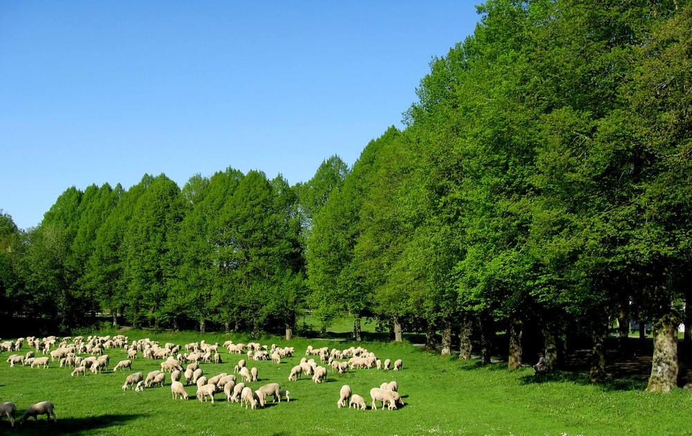 Die Herde von Triesdorf