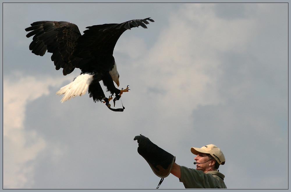 die Herrin des Adlers