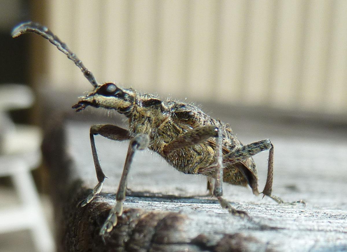 Die heutige Insekten, was könnte das sein