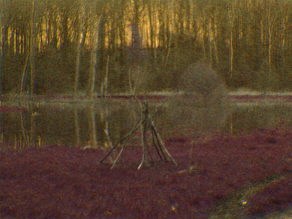 Die Hexe ist im Wald