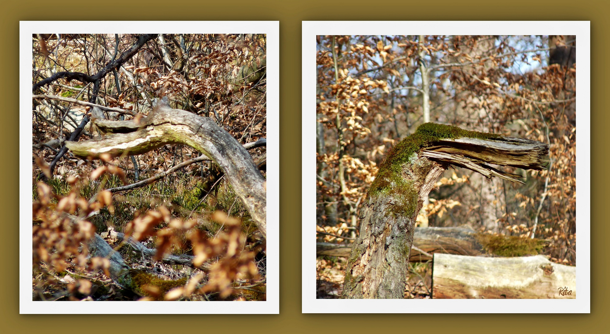 die Holzdinosaurier...:-)